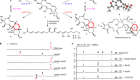 Enzyme-catalysed [6+4] cycloadditions in the biosynthesis of natural products