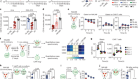 CAR T cell trogocytosis and cooperative killing regulate tumour antigen escape