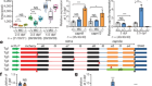PTC-bearing mRNA elicits a genetic compensation response via Upf3a and COMPASS components