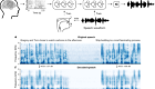Speech synthesis from neural decoding of spoken sentences