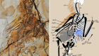 A new Jurassic scansoriopterygid and the loss of membranous wings in theropod dinosaurs