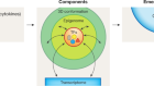 Transcription factors and 3D genome conformation in cell-fate decisions