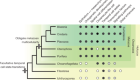 Pluripotency and the origin of animal multicellularity