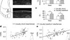 Foot callus thickness does not trade off protection for tactile sensitivity during walking