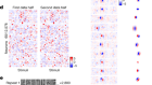 High-dimensional geometry of population responses in visual cortex