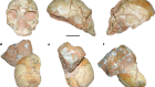 Apidima Cave fossils provide earliest evidence of Homo sapiens in Eurasia