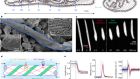 Collective intercellular communication through ultra-fast hydrodynamic trigger waves