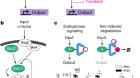 Modular and tunable biological feedback control using a de novo protein switch