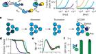 De novo design of bioactive protein switches
