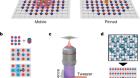 Imaging magnetic polarons in the doped Fermi–Hubbard model