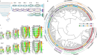 Molecular architecture of lineage allocation and tissue organization in early mouse embryo