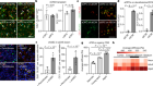 Niche stiffness underlies the ageing of central nervous system progenitor cells