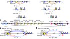 The fundamental role of chromatin loop extrusion in physiological V(D)J recombination