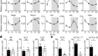 Light-entrained and brain-tuned circadian circuits regulate ILC3s and gut homeostasis