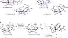 A 16-step synthesis of the isoryanodane diterpene (+)-perseanol