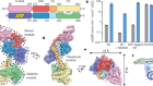 Structural insights into the mechanism of human soluble guanylate cyclase