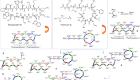 Chimeric peptidomimetic antibiotics against Gram-negative bacteria