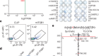MHC-II neoantigens shape tumour immunity and response to immunotherapy