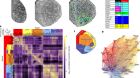 Hierarchical organization of cortical and thalamic connectivity