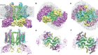 Cryo-EM structure of the spinach cytochrome b6 f complex at 3.6 Å resolution