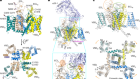 Cryo-EM structures of apo and antagonist-bound human Cav3.1