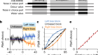 Frontal cortex neuron types categorically encode single decision variables