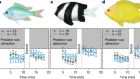 Ocean acidification does not impair the behaviour of coral reef fishes