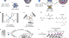 Constructing protein polyhedra via orthogonal chemical interactions
