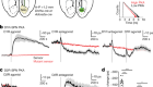 Cell-type-specific asynchronous modulation of PKA by dopamine in learning