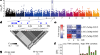 Genomic basis of geographical adaptation to soil nitrogen in rice