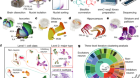 DNA methylation atlas of the mouse brain at single-cell resolution