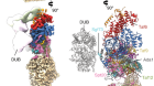 Structure of SAGA and mechanism of TBP deposition on gene promoters