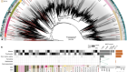 Giant virus diversity and host interactions through global metagenomics