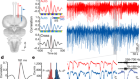 A claustrum in reptiles and its role in slow-wave sleep