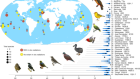 A simple dynamic model explains the diversity of island birds worldwide