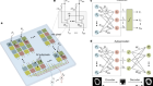 Ultrafast machine vision with 2D material neural network image sensors