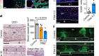 Lipid availability determines fate of skeletal progenitor cells via SOX9