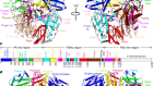 Structural insight into arenavirus replication machinery