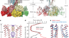 Ball-and-chain inactivation in a calcium-gated potassium channel