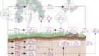 The fate of carbon in a mature forest under carbon dioxide enrichment