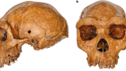 Dating the skull from Broken Hill, Zambia, and its position in human evolution