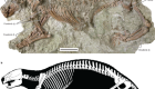 Skeleton of a Cretaceous mammal from Madagascar reflects long-term insularity