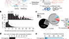 Phase and context shape the function of composite oncogenic mutations