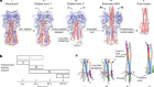 Structural transitions in influenza haemagglutinin at membrane fusion pH