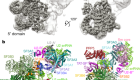 Molecular architecture of the human 17S U2 snRNP