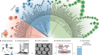 The proteome landscape of the kingdoms of life