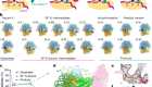 Cryo-EM of elongating ribosome with EF-Tu•GTP elucidates tRNA proofreading