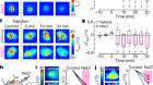 Sodium regulates clock time and output via an excitatory GABAergic pathway