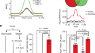 N6-methyladenine in DNA antagonizes SATB1 in early development