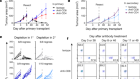 cDC1 prime and are licensed by CD4+ T cells to induce anti-tumour immunity